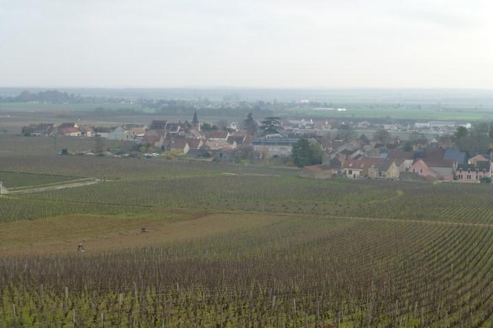 Beautiful Vineyard Views - Burgundy