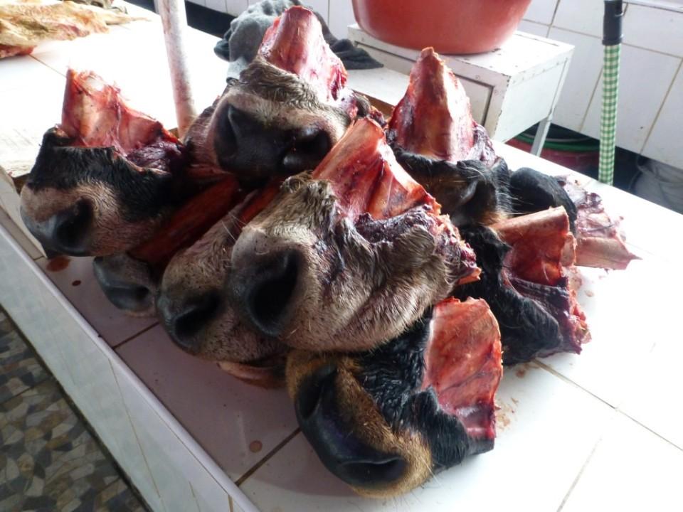 Cow Snouts...yum.